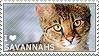 I love Savannahs by WishmasterAlchemist