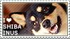 I love Shiba Inus