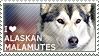 I love Alaskan Malamutes