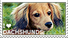 I love Dachshunds by WishmasterAlchemist