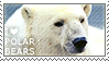 I love Polar Bears