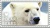 I love Polar Bears by WishmasterAlchemist