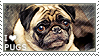 I love Pugs by WishmasterAlchemist