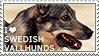 I love Swedish Vallhunds