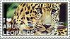 I love Amur Leopards