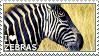 I love Zebras by WishmasterAlchemist