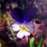 .:: Little Violetta ::. by WishmasterAlchemist