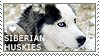 I love Siberian Huskies