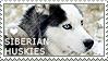I love Siberian Huskies