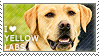 I love Yellow Labs by WishmasterAlchemist
