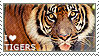 I love Tigers by WishmasterAlchemist