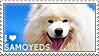 I love Samoyeds