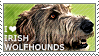 I love Irish Wolfhounds by WishmasterAlchemist