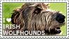 I love Irish Wolfhounds by WishmasterAlchemist