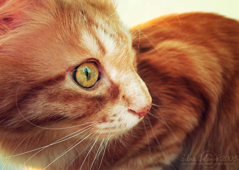 .:: Prisme Felin ::. by WishmasterAlchemist