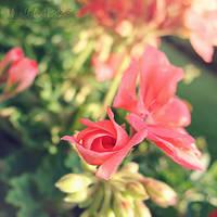 .:: Summer Memories II - Spiraling ::. by WishmasterAlchemist