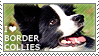 I love Border Collies by WishmasterAlchemist