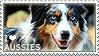 I love Australian Shepherds by WishmasterAlchemist