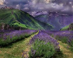 Lavender Valley by WishmasterAlchemist