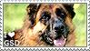 I love German Shepherd Dogs
