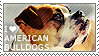 I love American Bulldogs by WishmasterAlchemist