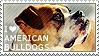I love American Bulldogs by WishmasterAlchemist