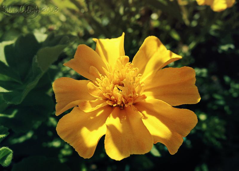 .:: Summer Memories V ::. by WishmasterAlchemist