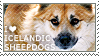 I love Icelandic Sheepdogs