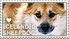 I love Icelandic Sheepdogs