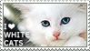 I love White Cats
