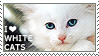 I love White Cats by WishmasterAlchemist