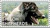 I love Shiloh Shepherds by WishmasterAlchemist