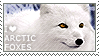 I love Arctic Foxes