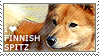 I love Finnish Spitz