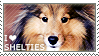 I love Shetland Sheepdogs