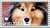 I love Shetland Sheepdogs by WishmasterAlchemist