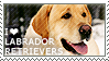 I love Labrador Retrievers by WishmasterAlchemist