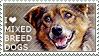 I love Mixed-breed Dogs