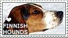 I love Finnish Hounds