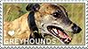I love Greyhounds by WishmasterAlchemist