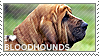 I love Bloodhounds by WishmasterAlchemist