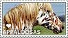 I love Appaloosas