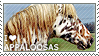 I love Appaloosas by WishmasterAlchemist