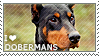 I love Dobermans by WishmasterAlchemist