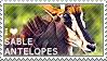 I love Sable Antelopes by WishmasterAlchemist