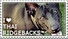 I love Thai Ridgebacks by WishmasterAlchemist