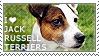 I love Jack Russell Terriers