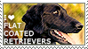 I love Flat-Coated Retrievers by WishmasterAlchemist