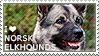 I love Norwegian Elkhounds