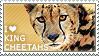 I love King Cheetahs